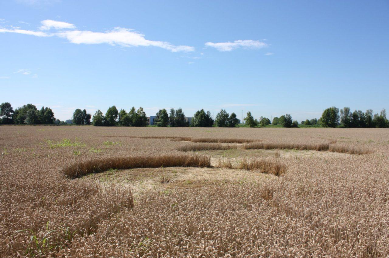 Brignano cerchi nel grano