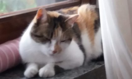 Dopo Ragù anche una gatta impallinata a Spirano