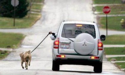A spasso con il cane... ma in auto