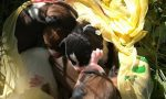 Cuccioli abbandonati in un sacchetto salvati da una bambina FOTO