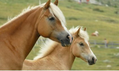 Balli country e musica aspettando Treviglio cavalli