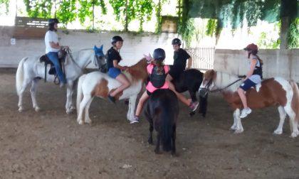 Con i pony di Roberta nell'oasi per animali sfortunati