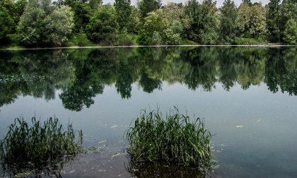 Bagno nel laghetto dei riflessi il Parco del Serio prende provvedimenti