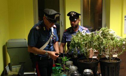 Coltivava marijuana in serra fai da te, arrestato