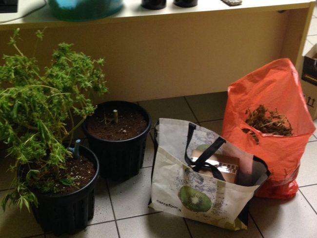 coltivava marijuana