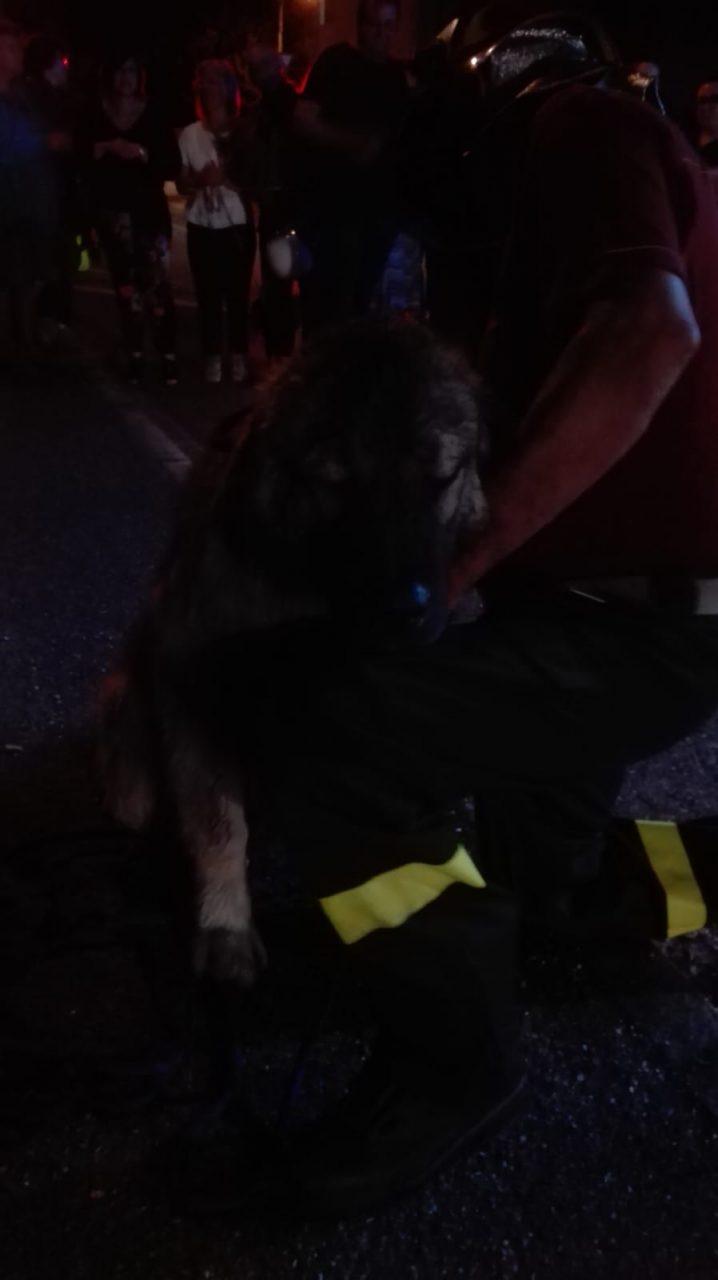 cane finisce nella roggia a Canonica