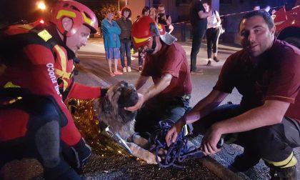 Cane finisce nella roggia, salvato dai pompieri FOTO