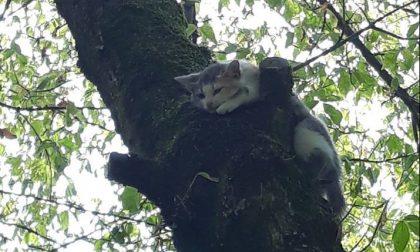 Recuperano un gatto abbandonato ma non erano volontari del gattile