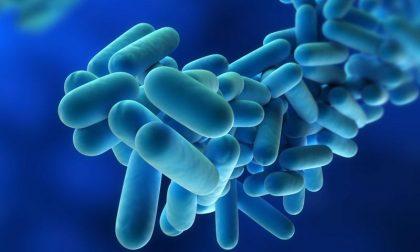 Legionella, un caso anche Saronno in provincia di Varese