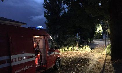 Bufera a Rivolta, albero caduto in viale Ponte Vecchio