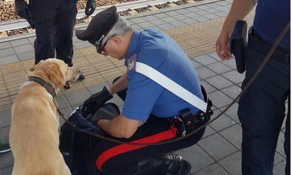 Carabinieri nelle stazioni,ecco i risultati delle operazioni FOTO