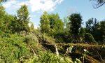 Maltempo abbatte alberi, sentieri chiusi nel bosco di Fara
