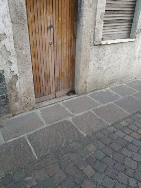 topi in centro a Pontirolo Nuovo