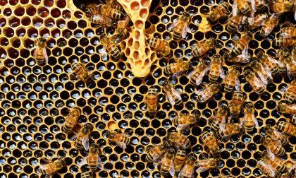 Maltempo, è stato un anno disastroso per le api bergmasche