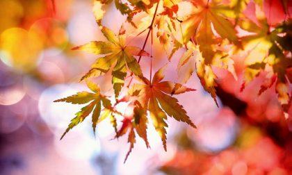 Arriva l'autunno? Ecco che tempo farà nei prossimi giorni
