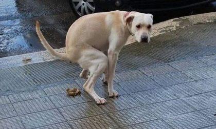 Deiezioni canine: c'è chi ha messo in atto il test del DNA
