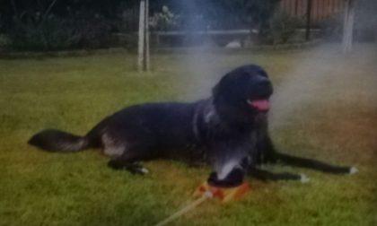 Cane morto dopo un giorno solo in pensione