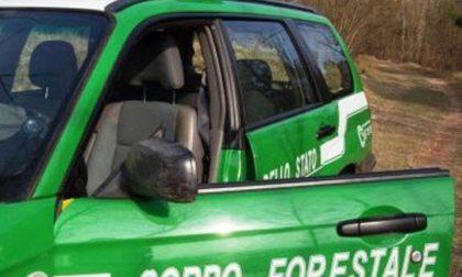 Puzze in paese, indagini in corso della forestale