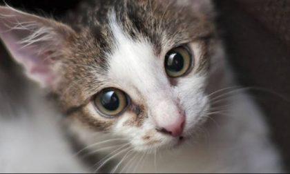 Seviziati e ammazzati: lecchese indagata per uccisione di gatti