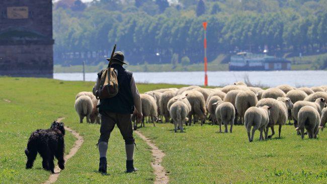 Campionato cani da pastore appassionati e curiosi in Valsassina