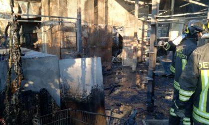 Orrore nel Milanese: incendio al gattile, strage di mici FOTO