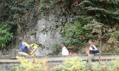 I migranti fanno razzia di castagne e in Valtellina corrono ai ripari