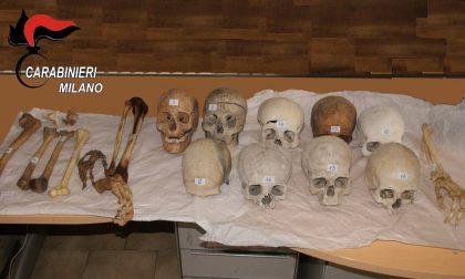 Teschi e ossa spedite con pacchi: macabra scoperta dei carabinieri