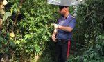 In casa una serra di marijuana, arrestato