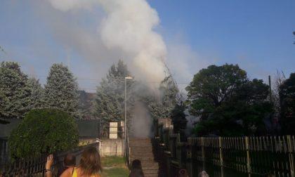 Ragazzini appiccano fuoco agli alberi del viale, è un disastro FOTO