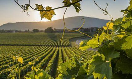 La Franciacorta in nomination come regione viticola dell'anno