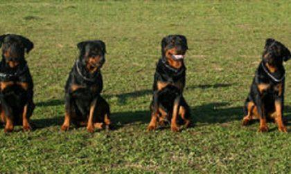 Rottweiler liberi al parco, sanzionati i padroni
