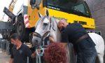 """Andrea Bocelli, il suo cavallo ha le extension """"made in Treviglio"""" FOTO"""