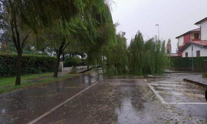 Maltempo Bassa | Scuole chiuse e alberi caduti nella Bassa orientale