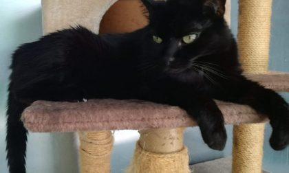 Gatti neri portano sfortuna e non vengono bene nei selfie?