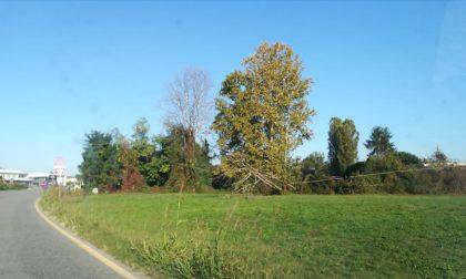 Vento forte, albero crolla sulla linea telefonica