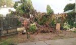 Maltempo Cremasco | Bomba d'acqua e vento, alberi caduti e allagamenti FOTO