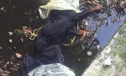 """Cane morto nel fossato: """"E' stato ucciso…"""""""