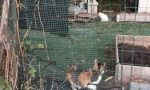 Vandali alla colonia felina, un gattino quasi assiderato