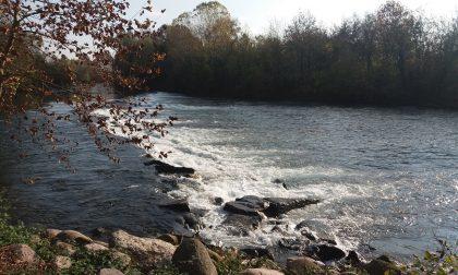 Emergenza pesci siluro e gamberi, distruggono la fauna dell'Oglio