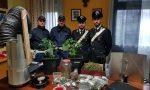 Blitz antidroga, padre di famiglia aveva in casa mezzo chilo di marijuana FOTO