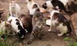 Sos: «Anche i mici pandinesi nell'oasi felina di Crema»
