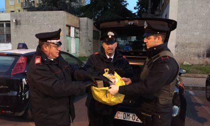Zingonia Libera, nuovo blitz dei carabinieri alle torri VIDEO