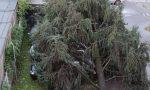 Auto schiacciata da un albero, l'appello di una famiglia