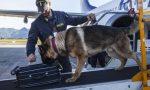 Un arresto a Orio per traffico internazionale di droga