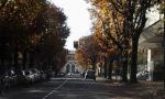 Piante abbattute in viale Piave e via De Gasperi, ma in primavera nuovi alberi