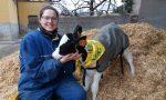 Cappottini e lampade riscaldanti: così gli allevatori proteggono gli animali dal freddo