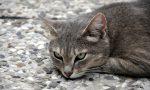 Giornata del gatto, oggi si festeggiano i nostri amici felini
