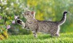 Gatti avvelenati al parco giochi e la paura corre ai bambini