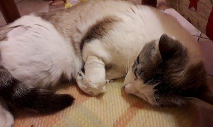 Gatta massacrata a calci, salvata in extremis dalla proprietaria