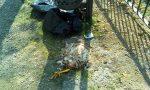 Rifiuti abbandonati: spunta anche la carcassa di un pollo